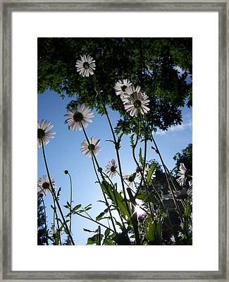 Looking Up Framed Print by Ken Day