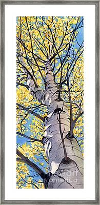 Looking Up Framed Print by Lorraine Watry