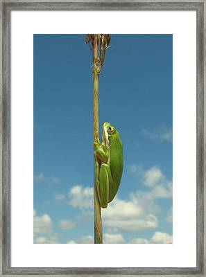 Looking Up Framed Print by Peg Urban