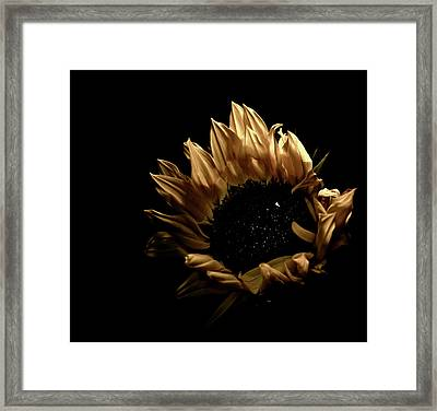 Looking Up Framed Print by Sheryl Thomas