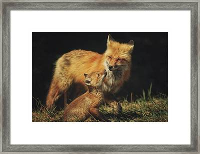 Looking Up To Mommy Framed Print by Carrie Ann Grippo-Pike