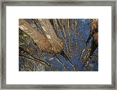 Framed Print featuring the photograph Looking Up While Looking Down by Debra and Dave Vanderlaan
