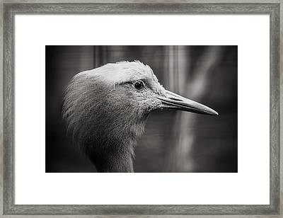 Lookout Framed Print by Angela Aird