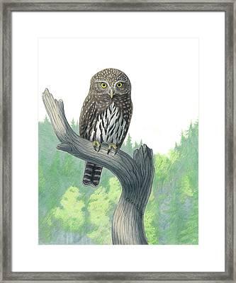 Lookout- Northern Pygmy-owl Framed Print by Kalen Malueg