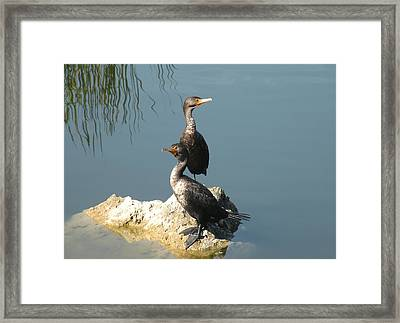 Framed Print featuring the photograph Lookout by Rosalie Scanlon