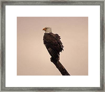 Framed Print featuring the photograph Looks Like Reign by Robert Geary
