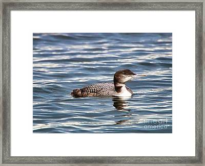 Loon  9509 Framed Print by Jack Schultz