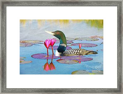 Loon And Lotus Framed Print