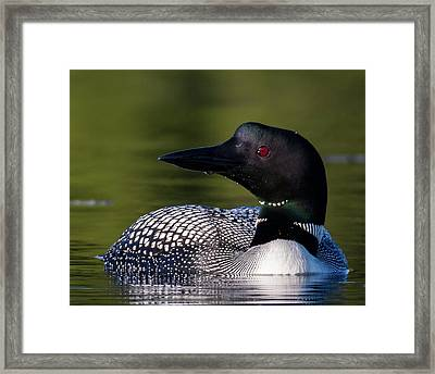 Loon Close Up Framed Print