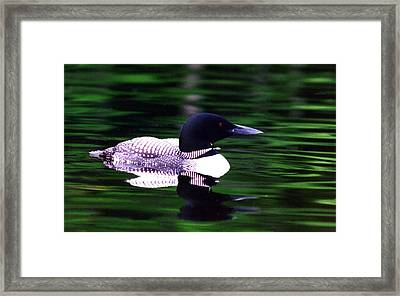 Loon On The Lake Framed Print by Rick Frost