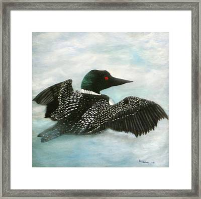 Loon Framed Print by Rebecca  Fitchett