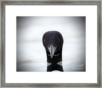 Loon Stare Framed Print