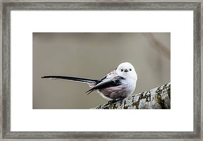 Framed Print featuring the photograph Loong Tailed by Torbjorn Swenelius