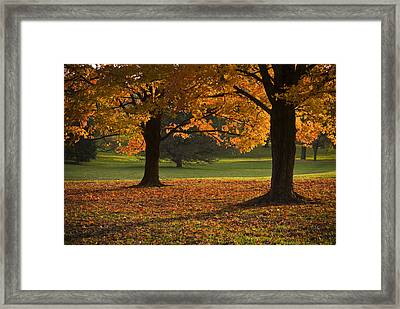 Loose Park Maple Trees Framed Print by Chad Davis