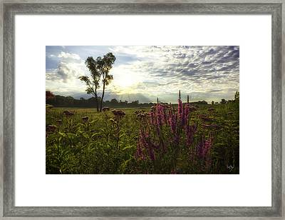Loosestrife Framed Print