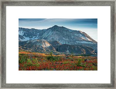 Loowit Falls Mount St Helens Wildflowers Framed Print by Mike Reid