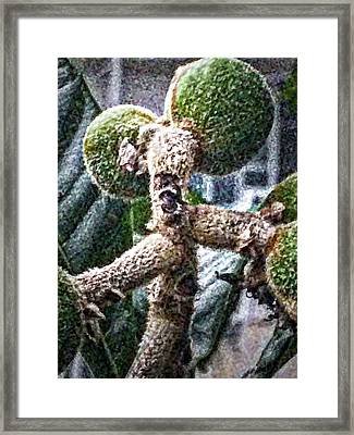 Loquat Man Photo Framed Print