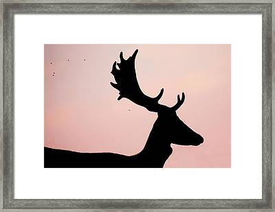 Lord Of The Flies - Fallow Deer Silhouette Framed Print