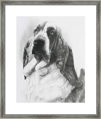 Lordly Framed Print by Barbara Keith