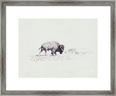 Lords Of The Yellowstone Framed Print