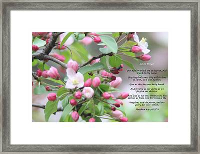 Lords Prayer Framed Print by Cliff Ball