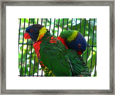 Lory Framed Print by Greg Patzer
