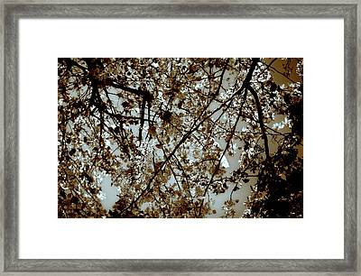 Framed Print featuring the photograph Branch Two by Lucian Capellaro