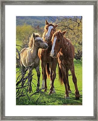 Amigos Framed Print by Sue Cullumber