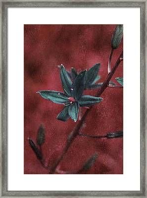 Lost Among Weeds Framed Print