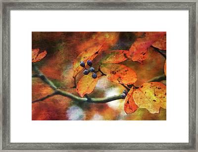 Lost Autumns Beauty 6570 Ldp_2 Framed Print