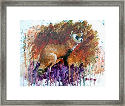 Lost Black-footed Ferret Framed Print by Marcus Moller