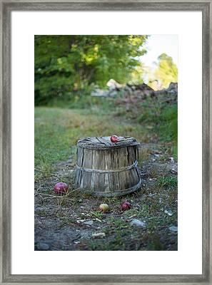 Lost Bushel Framed Print