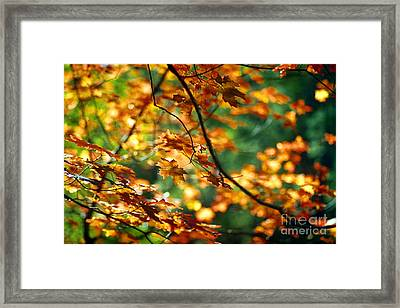 Lost In Leaves Framed Print by Kathy McClure
