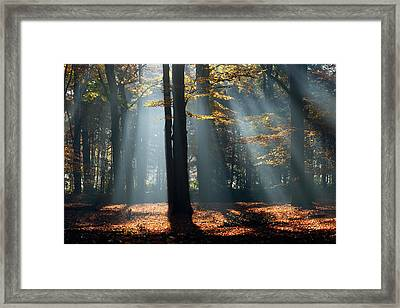 Lost In The Light Framed Print