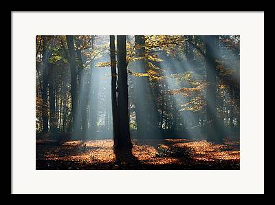 Licht Framed Prints