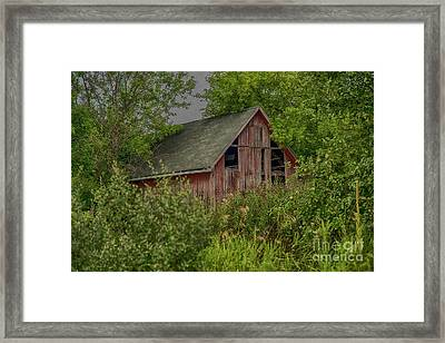 Lost In The Woods Framed Print by JRP Photography