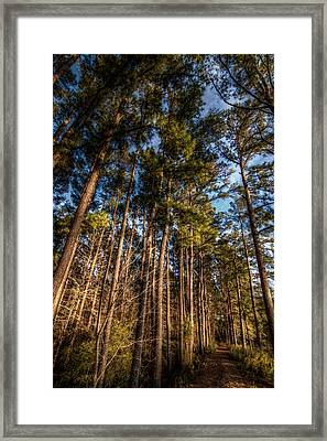 Lost In The Woods Framed Print by Linda Unger