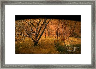 Lost Framed Print by Jayme X