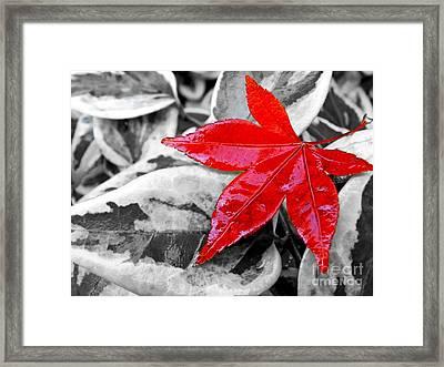 Lost Framed Print by Kaye Menner