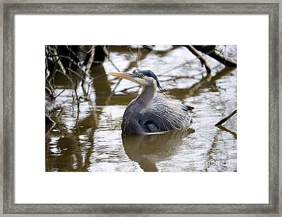 Framed Print featuring the photograph Lost Lagoon Great Blue Heron 2 by Terry Elniski