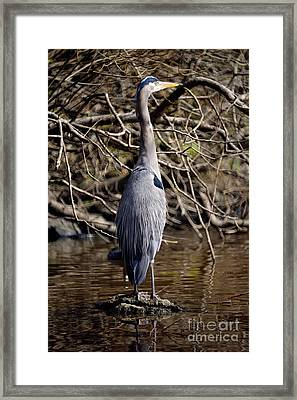 Framed Print featuring the photograph Lost Lagoon Great Blue Heron 3 by Terry Elniski