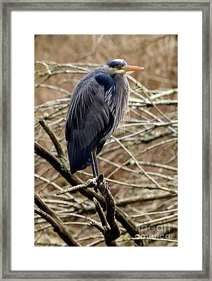 Framed Print featuring the photograph Lost Lagoon Great Blue Heron 4 by Terry Elniski