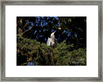 Framed Print featuring the photograph Lost Lagoon Great Blue Heron 5 by Terry Elniski