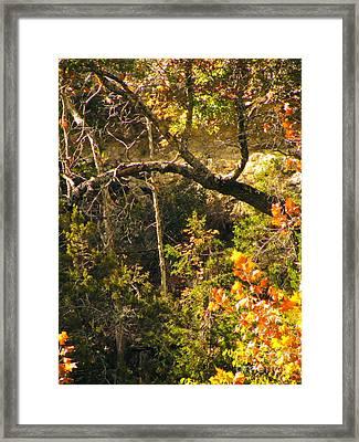 Lost Maples Scenery Framed Print by Joe Jake Pratt
