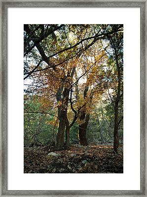 Framed Print featuring the photograph Lost Maples State Park Tree 41 by Karen Musick