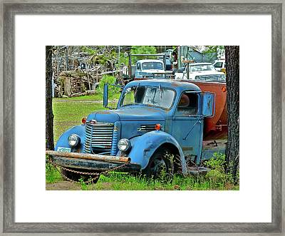 Lost Pride Framed Print