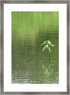 Lost Framed Print by Rosalie Scanlon