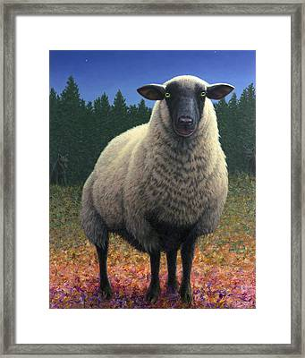 Lost Sheep Framed Print by James W Johnson