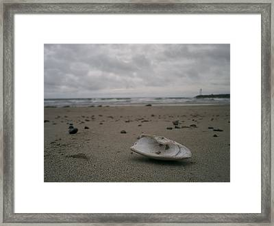 Lost Shell Framed Print by Casey Woodward