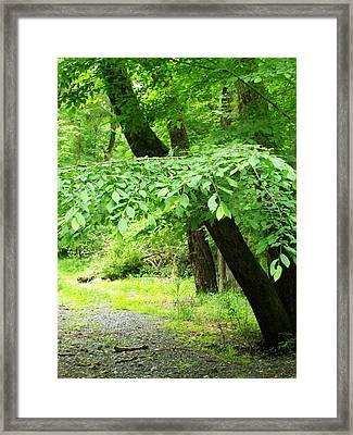 Lost Trail Framed Print by Fareeha Khawaja